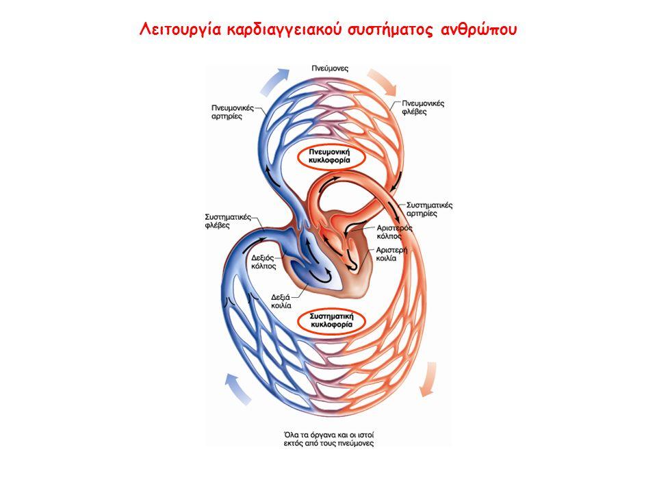 Λειτουργία καρδιαγγειακού συστήματος ανθρώπου