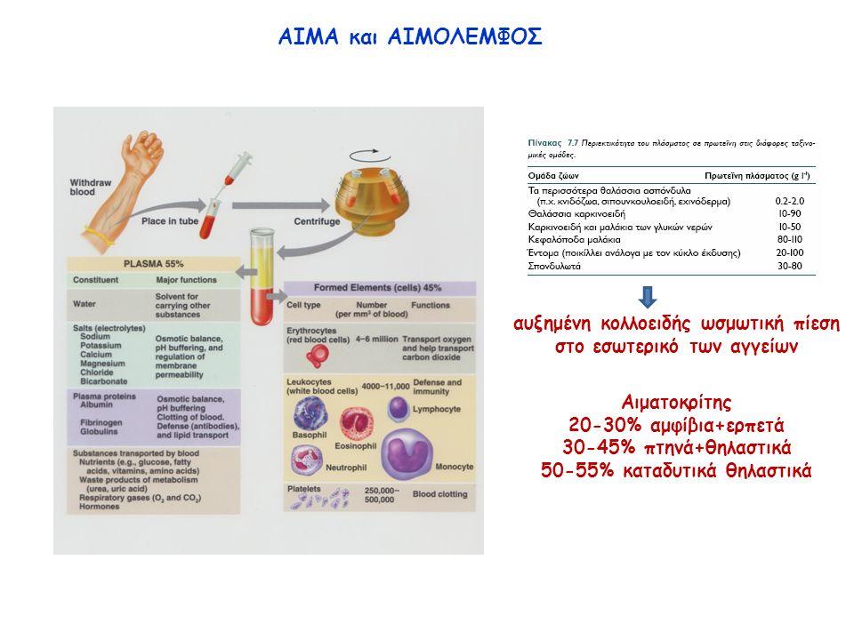 ΑΙΜΑ και ΑΙΜΟΛΕΜΦΟΣ αυξημένη κολλοειδής ωσμωτική πίεση στο εσωτερικό των αγγείων Αιματοκρίτης 20-30% αμφίβια+ερπετά 30-45% πτηνά+θηλαστικά 50-55% καταδυτικά θηλαστικά