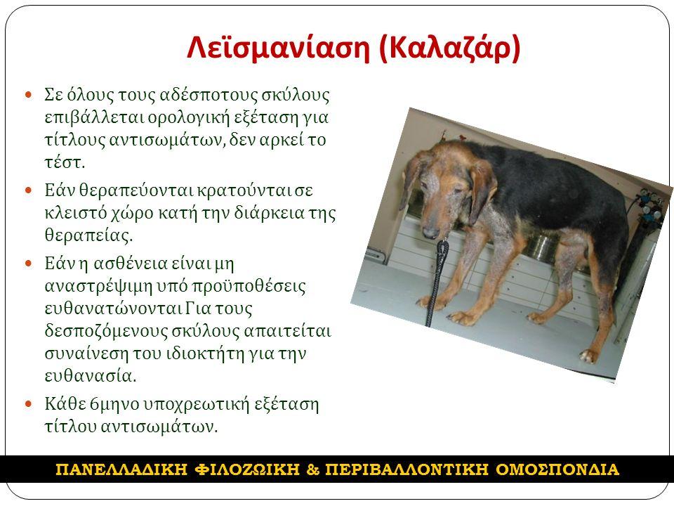 Λεϊσμανίαση ( Καλαζάρ ) Σε όλους τους αδέσποτους σκύλους επιβάλλεται ορολογική εξέταση για τίτλους αντισωμάτων, δεν αρκεί το τέστ.