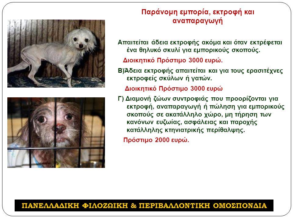 Απαιτείται άδεια εκτροφής ακόμα και όταν εκτρέφεται ένα θηλυκό σκυλί για εμπορικούς σκοπούς.