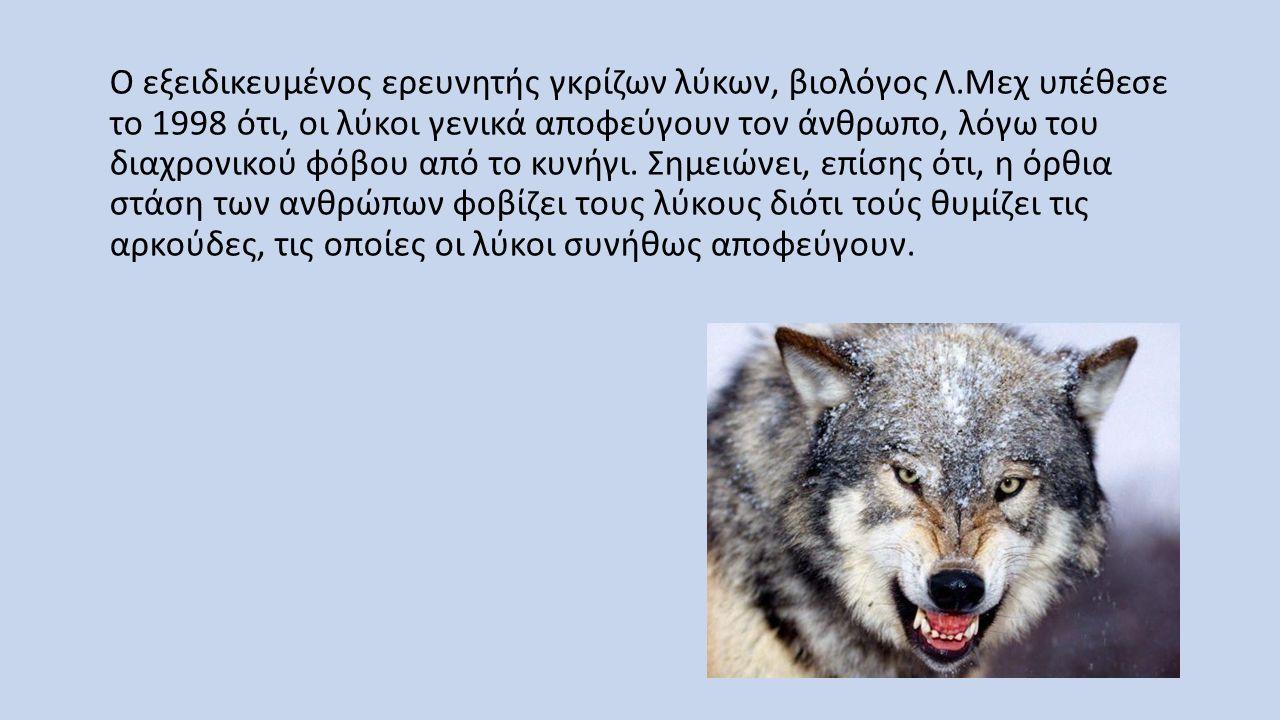Ο εξειδικευμένος ερευνητής γκρίζων λύκων, βιολόγος Λ.Μεχ υπέθεσε το 1998 ότι, οι λύκοι γενικά αποφεύγουν τον άνθρωπο, λόγω του διαχρονικού φόβου από τ