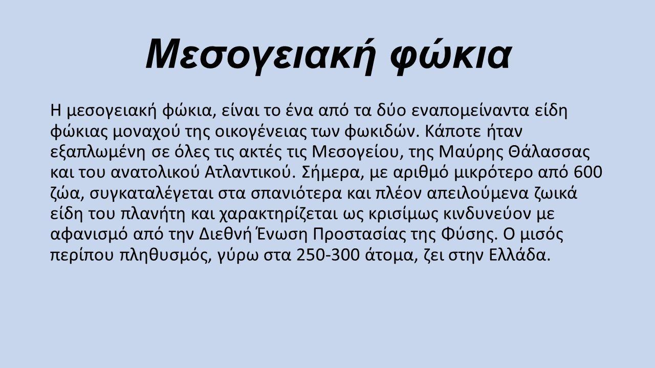 Μεσογειακή φώκια Η μεσογειακή φώκια, είναι το ένα από τα δύο εναπομείναντα είδη φώκιας μοναχού της οικογένειας των φωκιδών. Κάποτε ήταν εξαπλωμένη σε