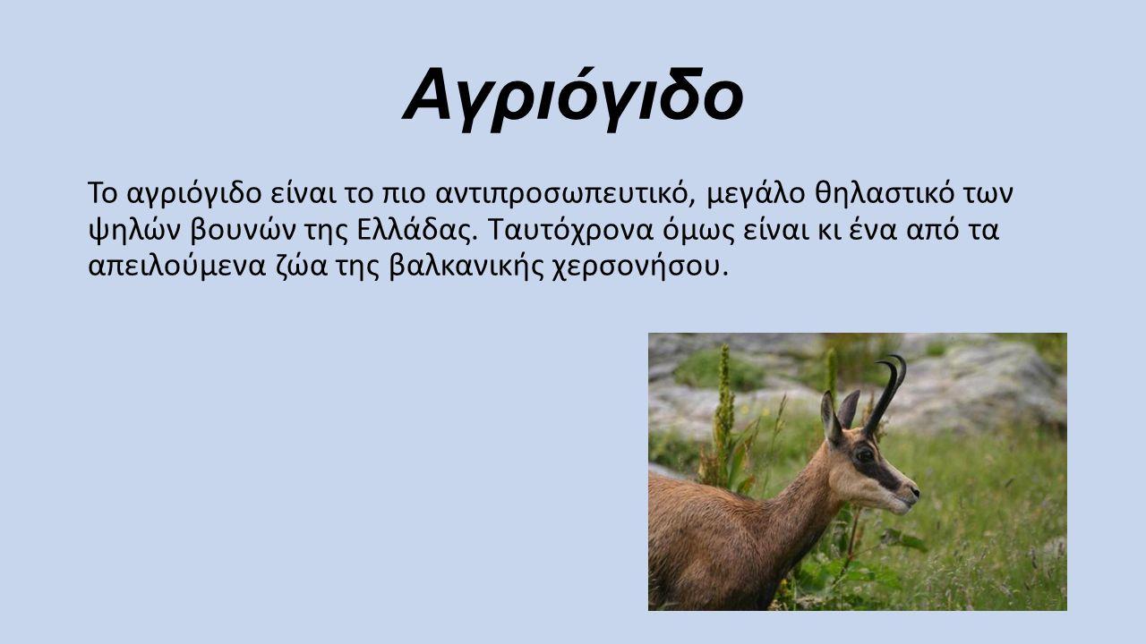 Αγριόγιδο Το αγριόγιδο είναι το πιο αντιπροσωπευτικό, μεγάλο θηλαστικό των ψηλών βουνών της Ελλάδας. Ταυτόχρονα όμως είναι κι ένα από τα απειλούμενα ζ