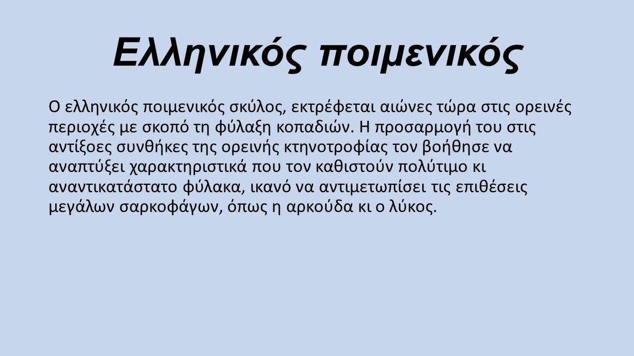 Ελληνικός ποιμενικός Ο ελληνικός ποιμενικός σκύλος, εκτρέφεται αιώνες τώρα στις ορεινές περιοχές με σκοπό τη φύλαξη κοπαδιών. Η προσαρμογή του στις αν