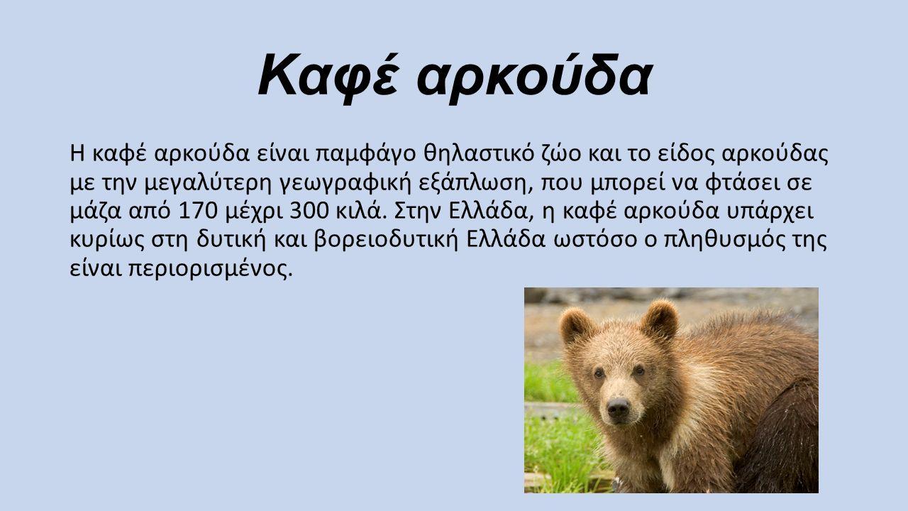 Καφέ αρκούδα Η καφέ αρκούδα είναι παμφάγο θηλαστικό ζώο και το είδος αρκούδας με την μεγαλύτερη γεωγραφική εξάπλωση, που μπορεί να φτάσει σε μάζα από