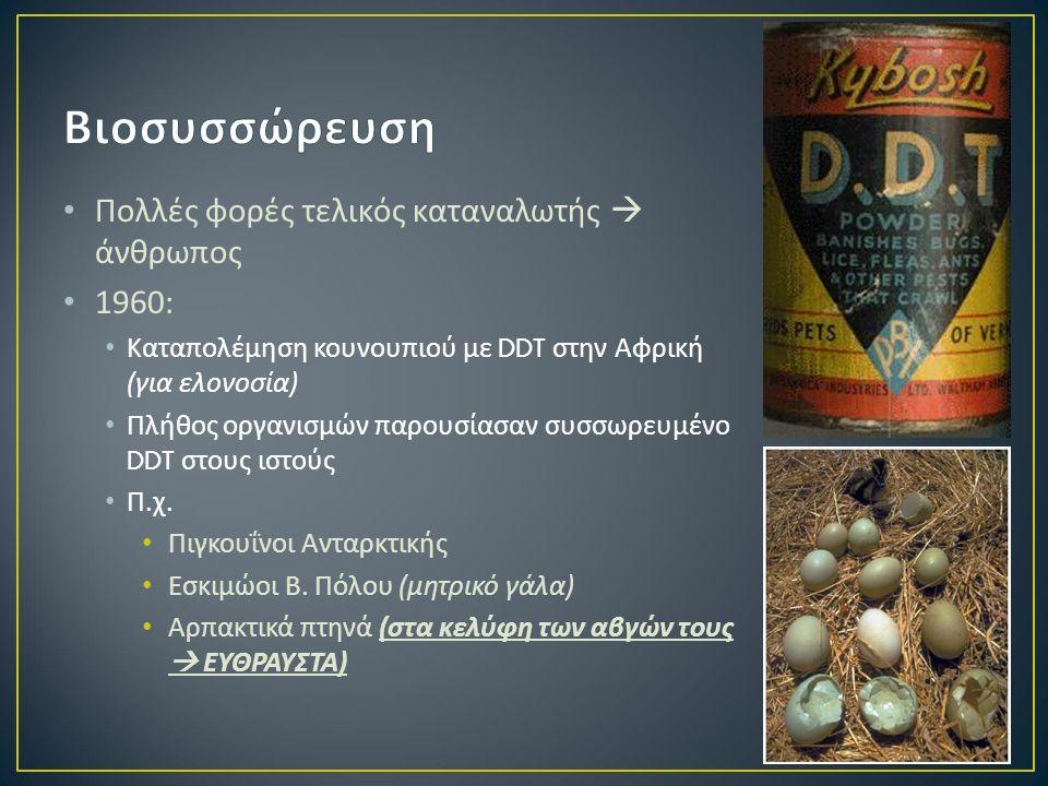 Πολλές φορές τελικός καταναλωτής  άνθρωπος 1960: Καταπολέμηση κουνουπιού με DDT στην Αφρική ( για ελονοσία ) Πλήθος οργανισμών παρουσίασαν συσσωρευμένο DDT στους ιστούς Π.