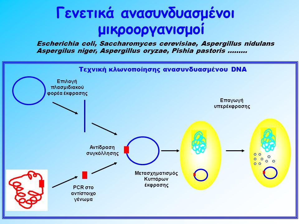 Γενετικά ανασυνδυασμένοι μικροοργανισμοί Escherichia coli, Saccharomyces cerevisiae, Aspergillus nidulans Aspergilus niger, Aspergillus oryzae, Pishia pastoris ……… Τεχνική κλωνοποίησης ανασυνδυασμένου DΝΑ PCR στο αντίστοιχο γένωμα Μετασχηματισμός Κυττάρων έκφρασης Αντίδραση συγκόλλησης Επιλογή πλασμιδιακού φορέα έκφρασης Επαγωγή υπερέκφρασης