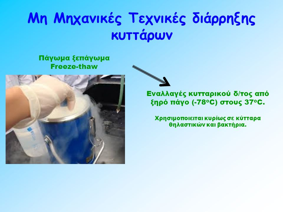 Μη Μηχανικές Τεχνικές διάρρηξης κυττάρων Πάγωμα ξεπάγωμα Freeze-thaw Εναλλαγές κυτταρικού δ/τος από ξηρό πάγο (-78 ο C) στους 37 ο C.