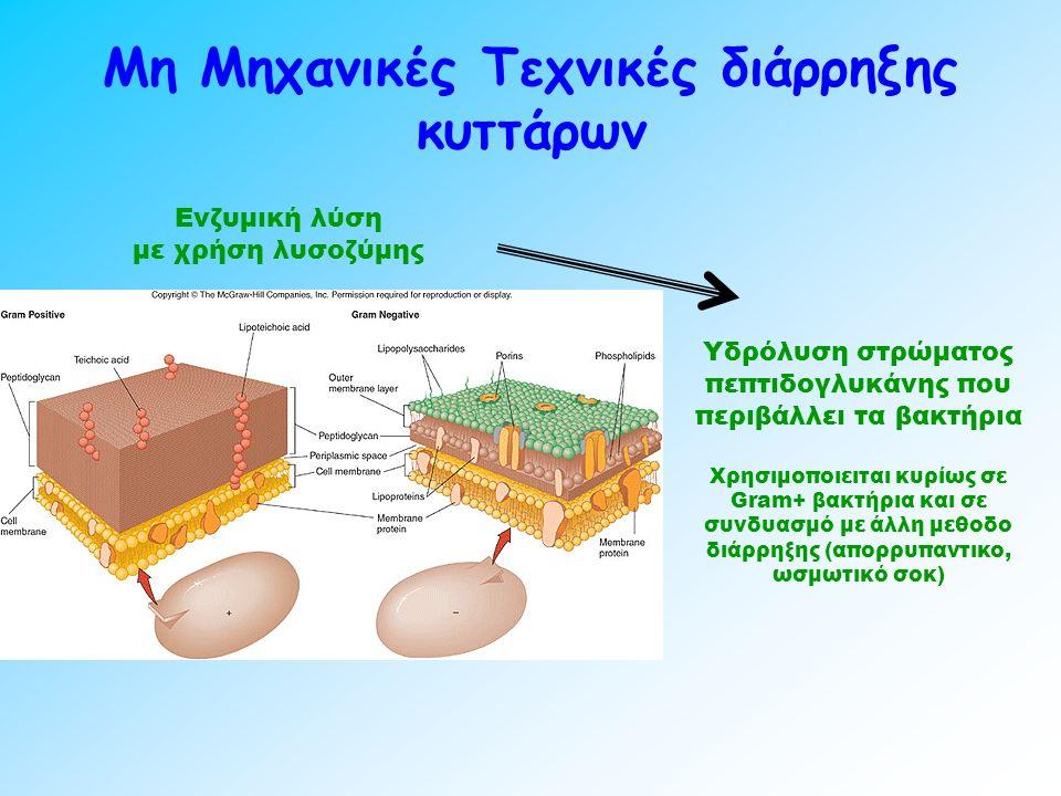 Μη Μηχανικές Τεχνικές διάρρηξης κυττάρων Ενζυμική λύση με χρήση λυσοζύμης Υδρόλυση στρώματος πεπτιδογλυκάνης που περιβάλλει τα βακτήρια Χρησιμοποιειται κυρίως σε Gram+ βακτήρια και σε συνδυασμό με άλλη μεθοδο διάρρηξης (απορρυπαντικο, ωσμωτικό σοκ)