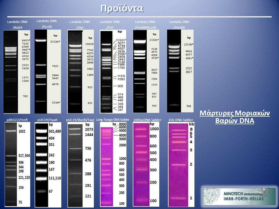 Μάρτυρες Μοριακών Βαρών DNA Lambda DNA /StyI Lambda DNA /BstEII Lambda DNA /EcoRI Lambda DNA /HindIII pBR322/HinfIpUC19/HpaIIpUC19/BseBI/TaqI Lambda DNA /PstI Lambda DNA /HindIII/EcoRI 1kb DNA ladder Long Range DNA ladder 100bpDNA ladder Προϊόντα