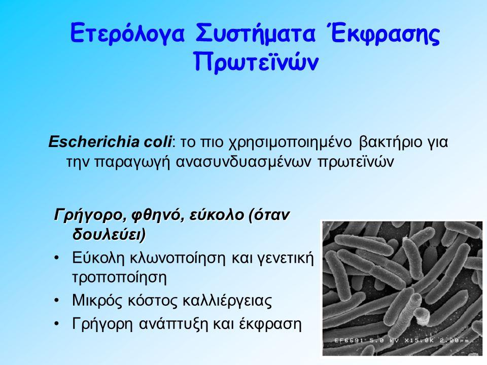 Escherichia coli: το πιο χρησιμοποιημένο βακτήριο για την παραγωγή ανασυνδυασμένων πρωτεϊνών Ετερόλογα Συστήματα Έκφρασης Πρωτεϊνών Γρήγορο, φθηνό, εύκολο (όταν δουλεύει) Εύκολη κλωνοποίηση και γενετική τροποποίηση Μικρός κόστος καλλιέργειας Γρήγορη ανάπτυξη και έκφραση