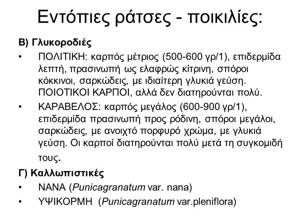 Εντόπιες ράτσες - ποικιλίες: Β) Γλυκοροδιές ΠΟΛΙΤΙΚΗ: καρπός μέτριος (500-600 γρ/1), επιδερμίδα λεπτή, πρασινωπή ως ελαφρώς κίτρινη, σπόροι κόκκινοι,