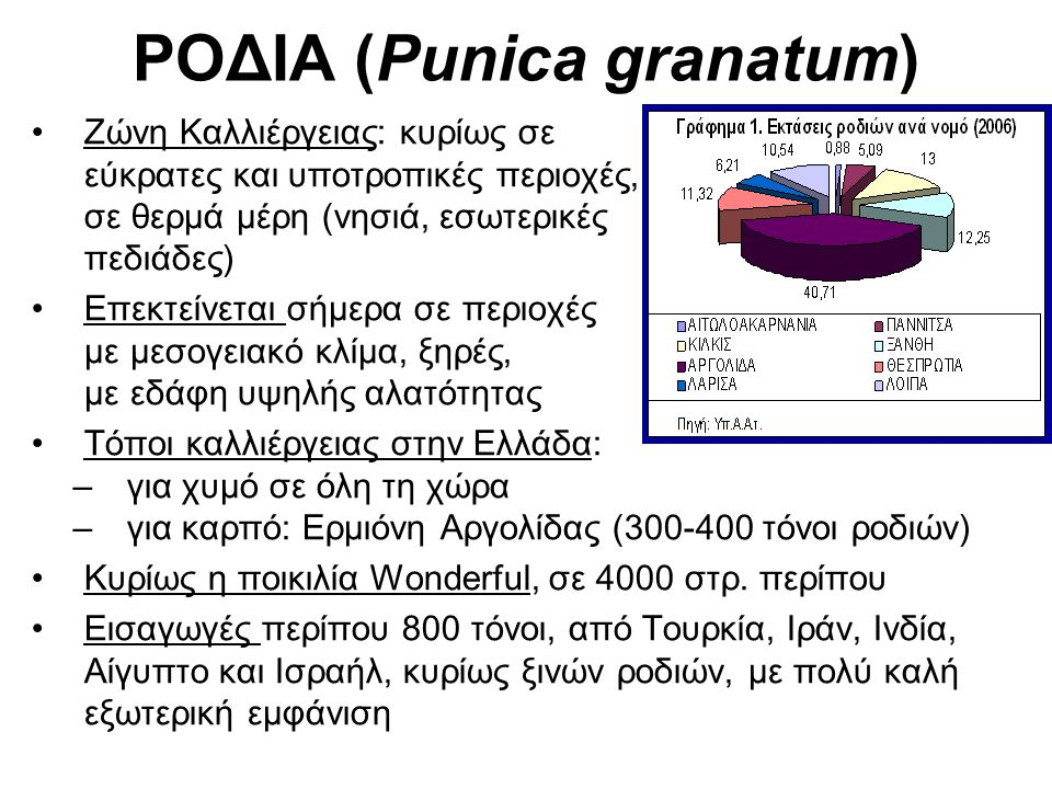 ΡΟΔΙΑ (Punica granatum) Ζώνη Καλλιέργειας: κυρίως σε εύκρατες και υποτροπικές περιοχές, σε θερμά μέρη (νησιά, εσωτερικές πεδιάδες) Επεκτείνεται σήμερα