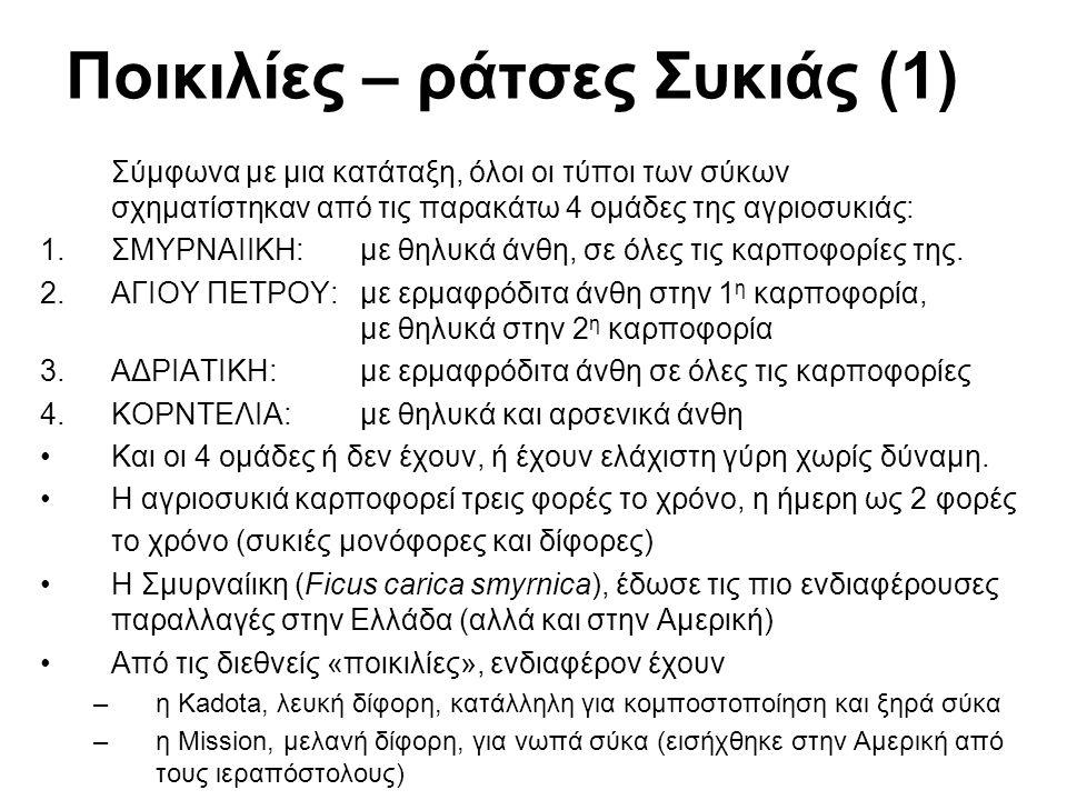 Ποικιλίες – ράτσες Συκιάς (1) Σύμφωνα με μια κατάταξη, όλοι οι τύποι των σύκων σχηματίστηκαν από τις παρακάτω 4 ομάδες της αγριοσυκιάς: 1.ΣΜΥΡΝΑΙΙΚΗ: με θηλυκά άνθη, σε όλες τις καρποφορίες της.