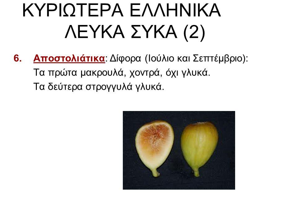 ΚΥΡΙΩΤΕΡΑ ΕΛΛΗΝΙΚΑ ΛΕΥΚΑ ΣΥΚΑ (2) 6.Αποστολιάτικα: Δίφορα (Ιούλιο και Σεπτέμβριο): Τα πρώτα μακρουλά, χοντρά, όχι γλυκά. Τα δεύτερα στρογγυλά γλυκά.