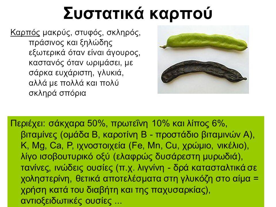 Συστατικά καρπού Καρπός μακρύς, στυφός, σκληρός, πράσινος και ξηλώδης εξωτερικά όταν είναι άγουρος, καστανός όταν ωριμάσει, με σάρκα ευχάριστη, γλυκιά, αλλά με πολλά και πολύ σκληρά σπόρια Περιέχει: σάκχαρα 50%, πρωτεΐνη 10% και λίπος 6%, βιταμίνες (ομάδα Β, καροτίνη Β - προστάδιο βιταμινών Α), Κ, Mg, Ca, P, ιχνοστοιχεία (Fe, Mn, Cu, χρώμιο, νικέλιο), λίγο ισοβουτυρικό οξύ (ελαφρώς δυσάρεστη μυρωδιά), τανίνες, ινώδεις ουσίες (π.χ.