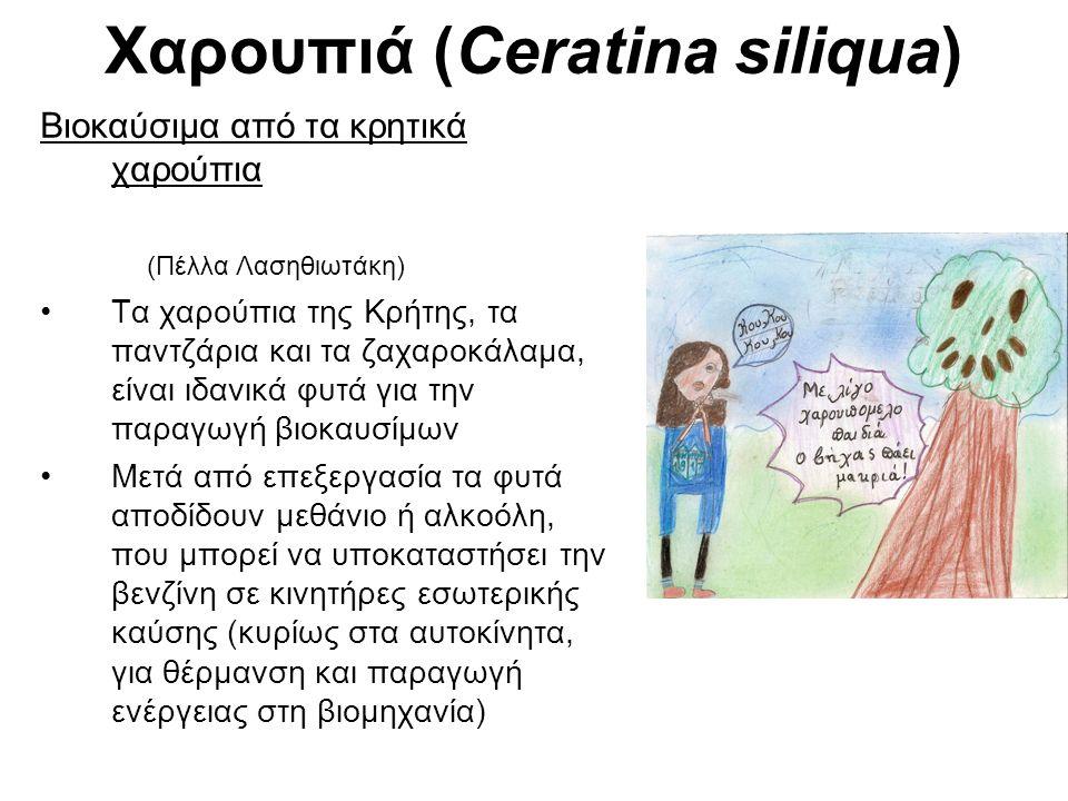 Χαρουπιά (Ceratina siliqua) Βιοκαύσιμα από τα κρητικά χαρούπια (Πέλλα Λασηθιωτάκη) Τα χαρούπια της Κρήτης, τα παντζάρια και τα ζαχαροκάλαμα, είναι ιδα