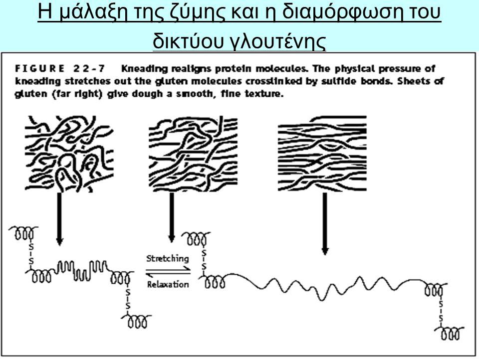 39 Η ΣΥΣΤΑΣΗ ΤΟΥ ΨΩΜΙΟΥ Η αρτόμαζα σχηματίζεται από αμυλοκόκκους = τούβλα (bricks) + Το συνεχές δίκτυο της γλουτένης (continuous gluten network) = τσιμέντο (cement)