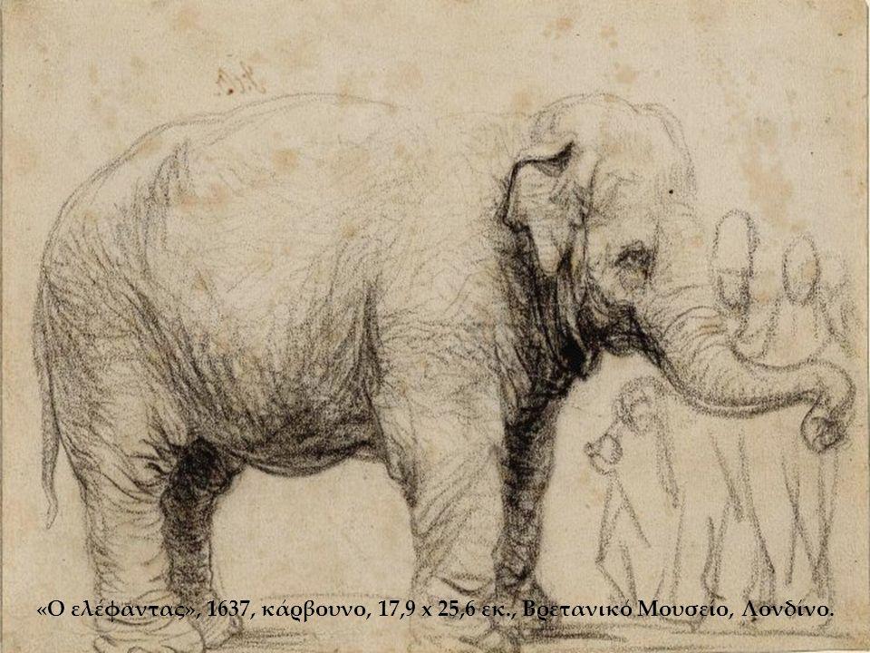 «Ο ελέφαντας», 1637, κάρβουνο, 17,9 x 25,6 εκ., Βρετανικό Μουσείο, Λονδίνο.