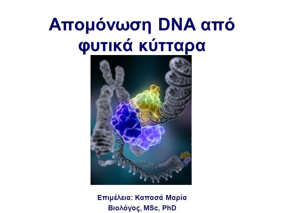 Aπομόνωση DNA από φυτικά κύτταρα Επιμέλεια: Καπασά Μαρία Βιολόγος, MSc, PhD