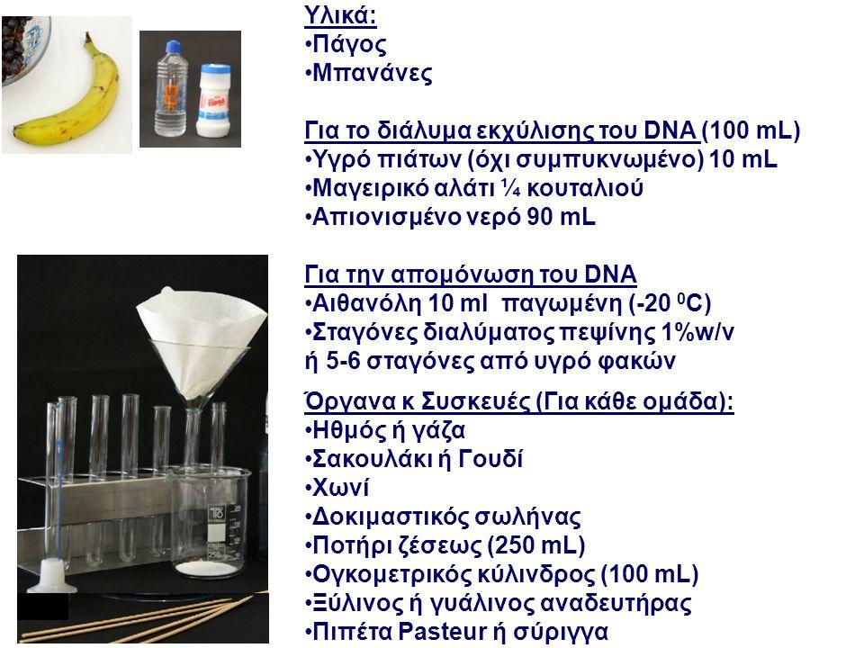 Υλικά: Πάγος Μπανάνες Για το διάλυμα εκχύλισης του DNA (100 mL) Υγρό πιάτων (όχι συμπυκνωμένο) 10 mL Μαγειρικό αλάτι ¼ κουταλιού Απιονισμένο νερό 90 mL Για την απομόνωση του DNA Αιθανόλη 10 ml παγωμένη (-20 0 C) Σταγόνες διαλύματος πεψίνης 1%w/v ή 5-6 σταγόνες από υγρό φακών Ηθμός ή γάζα Σακουλάκι ή Γουδί Χωνί Δοκιμαστικός σωλήνας Ποτήρι ζέσεως (250 mL) Ογκομετρικός κύλινδρος (100 mL) Ξύλινος ή γυάλινος αναδευτήρας Πιπέτα Pasteur ή σύριγγα Όργανα κ Συσκευές (Για κάθε ομάδα):