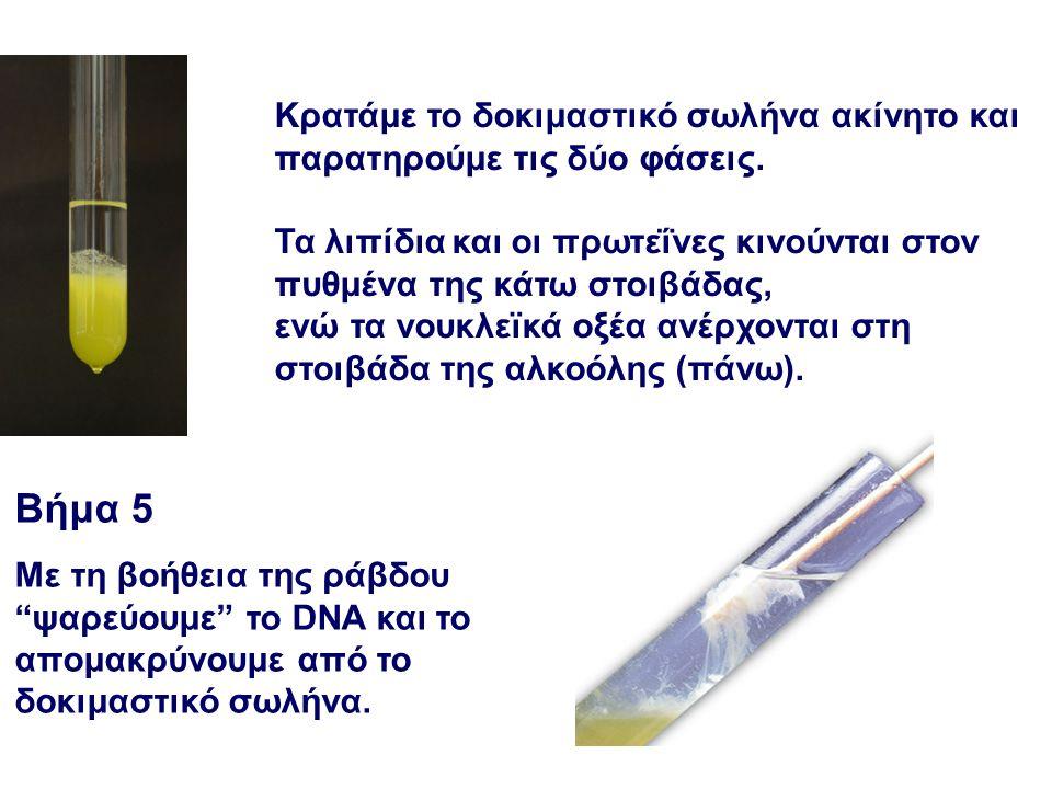 Εναλλακτικά… Απομόνωση DNA από επιθηλιακά κύτταρα ανθρώπου http://learn.genetics.utah.edu/content/labs/extraction/