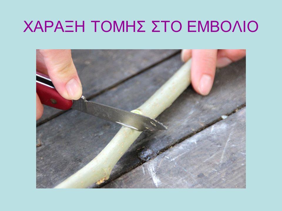 ΧΑΡΑΞΗ ΤΟΜΗΣ ΣΤΟ ΕΜΒΟΛΙΟ