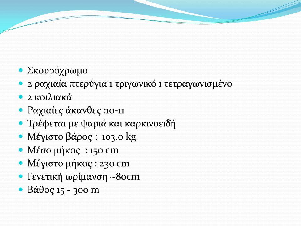 Σκουρόχρωμο 2 ραχιαία πτερύγια 1 τριγωνικό 1 τετραγωνισμένο 2 κοιλιακά Ραχιαίες άκανθες :10-11 Τρέφεται με ψαριά και καρκινοειδή Μέγιστο βάρος : 103.0 kg Μέσο μήκος : 150 cm Μέγιστο μήκος : 230 cm Γενετική ωρίμανση ~80cm Βάθος 15 - 300 m