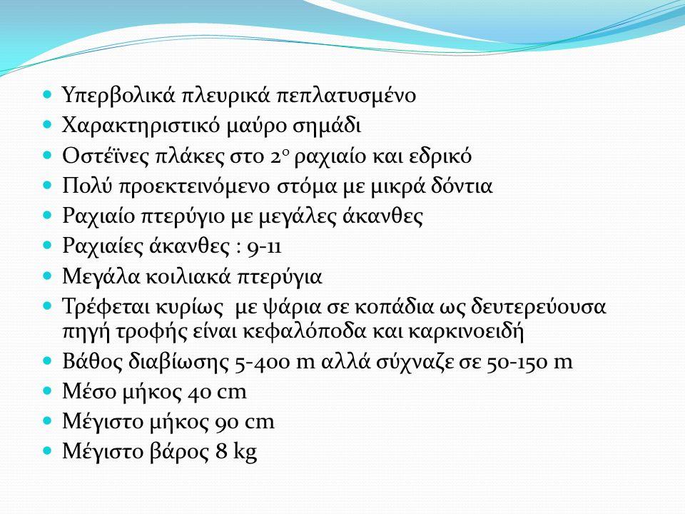 Υπερβολικά πλευρικά πεπλατυσμένο Χαρακτηριστικό μαύρο σημάδι Οστέϊνες πλάκες στο 2 ο ραχιαίο και εδρικό Πολύ προεκτεινόμενο στόμα με μικρά δόντια Ραχιαίο πτερύγιο με μεγάλες άκανθες Ραχιαίες άκανθες : 9-11 Μεγάλα κοιλιακά πτερύγια Τρέφεται κυρίως με ψάρια σε κοπάδια ως δευτερεύουσα πηγή τροφής είναι κεφαλόποδα και καρκινοειδή Βάθος διαβίωσης 5-400 m αλλά σύχναζε σε 50-150 m Μέσο μήκος 40 cm Μέγιστο μήκος 90 cm Μέγιστο βάρος 8 kg