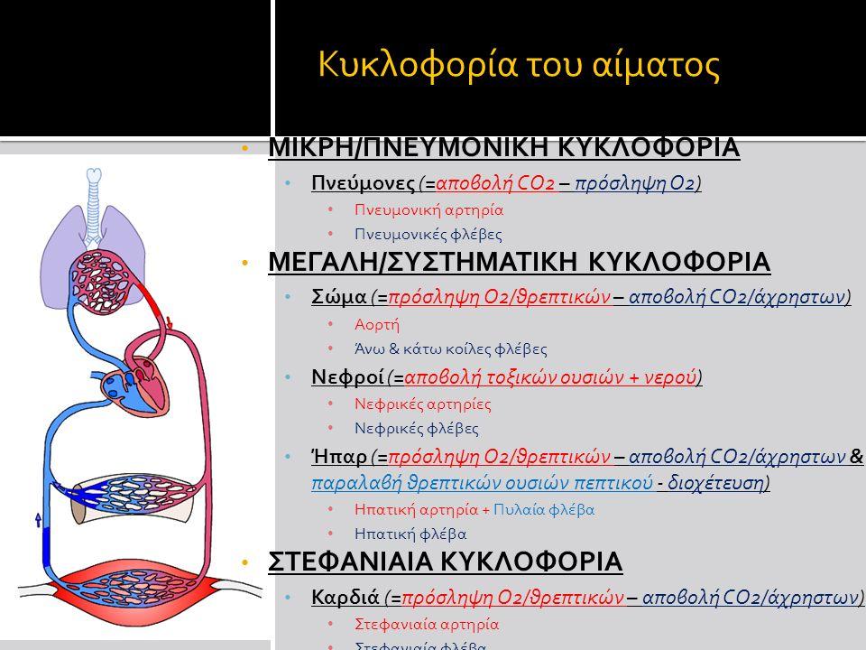 Κυκλοφορία του αίματος ΜΙΚΡΗ/ΠΝΕΥΜΟΝΙΚΗ ΚΥΚΛΟΦΟΡΙΑ Πνεύμονες (=αποβολή CΟ2 – πρόσληψη Ο2) Πνευμονική αρτηρία Πνευμονικές φλέβες ΜΕΓΑΛΗ/ΣΥΣΤΗΜΑΤΙΚΗ ΚΥΚΛΟΦΟΡΙΑ Σώμα (=πρόσληψη O2/θρεπτικών – αποβολή CO2/άχρηστων) Αορτή Άνω & κάτω κοίλες φλέβες Νεφροί (=αποβολή τοξικών ουσιών + νερού) Νεφρικές αρτηρίες Νεφρικές φλέβες Ήπαρ (=πρόσληψη O2/θρεπτικών – αποβολή CO2/άχρηστων & παραλαβή θρεπτικών ουσιών πεπτικού - διοχέτευση) Ηπατική αρτηρία + Πυλαία φλέβα Ηπατική φλέβα ΣΤΕΦΑΝΙΑΙΑ ΚΥΚΛΟΦΟΡΙΑ Καρδιά (=πρόσληψη O2/θρεπτικών – αποβολή CO2/άχρηστων) Στεφανιαία αρτηρία Στεφανιαία φλέβα