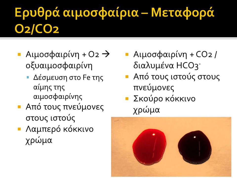  Αιμοσφαιρίνη + O2  οξυαιμοσφαιρίνη  Δέσμευση στο Fe της αίμης της αιμοσφαιρίνης  Από τους πνεύμονες στους ιστούς  Λαμπερό κόκκινο χρώμα  Αιμοσφαιρίνη + CO2 / διαλυμένα HCO3 -  Από τους ιστούς στους πνεύμονες  Σκούρο κόκκινο χρώμα