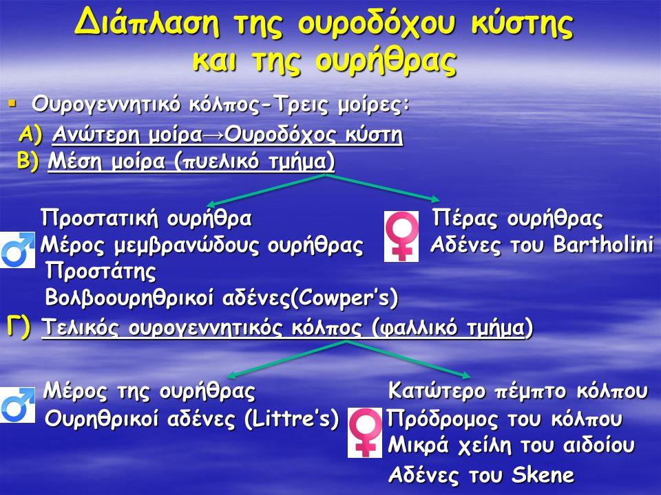 Διάπλαση της ουροδόχου κύστης και της ουρήθρας  Ουρογεννητικό κόλπος-Τρεις μοίρες: Α) Ανώτερη μοίρα → Ουροδόχος κύστη Α) Ανώτερη μοίρα → Ουροδόχος κύ