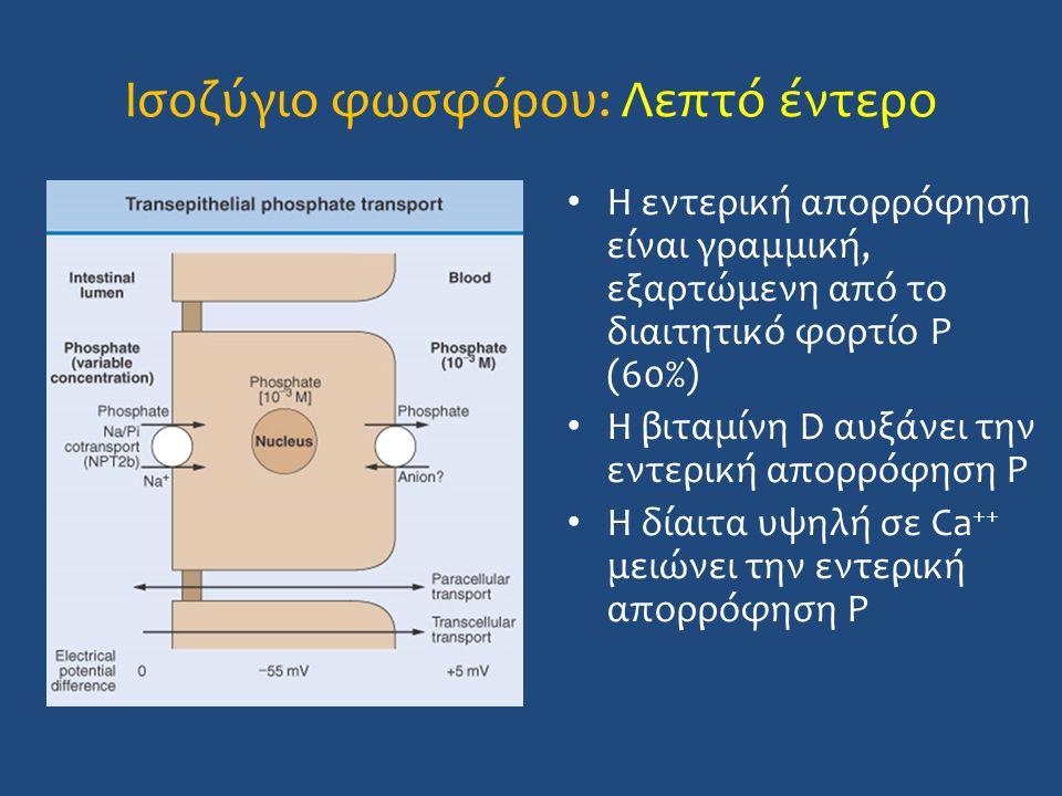 Ισοζύγιο φωσφόρου: Λεπτό έντερο Η εντερική απορρόφηση είναι γραμμική, εξαρτώμενη από το διαιτητικό φορτίο P (60%) Η βιταμίνη D αυξάνει την εντερική απ