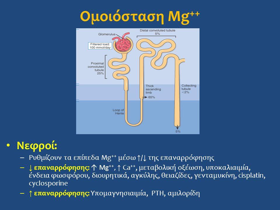 Ομοιόσταση Mg ++ Νεφροί: – Ρυθμίζουν τα επίπεδα Mg ++ μέσω ↑ / ↓ της επαναρρόφησης –↓ επαναρρόφησης: ↑ Mg ++, ↑ Ca ++, μεταβολική οξέωση, υποκαλιαιμία, ένδεια φωσφόρου, διουρητικά, αγκύλης, θειαζίδες, γενταμυκίνη, cisplatin, cyclosporine –↑ επαναρρόφησης: Υπομαγνησιαιμία, PTH, αμιλορίδη