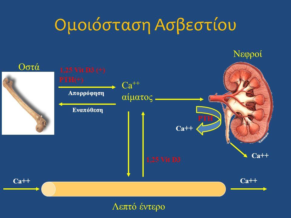Ca ++ αίματος Λεπτό έντερο Νεφροί Ca++ Οστά 1,25 Vit D3 (+) 1,25 Vit D3 Εναπόθεση Ca++ PTH PTH(+) Απορρόφηση