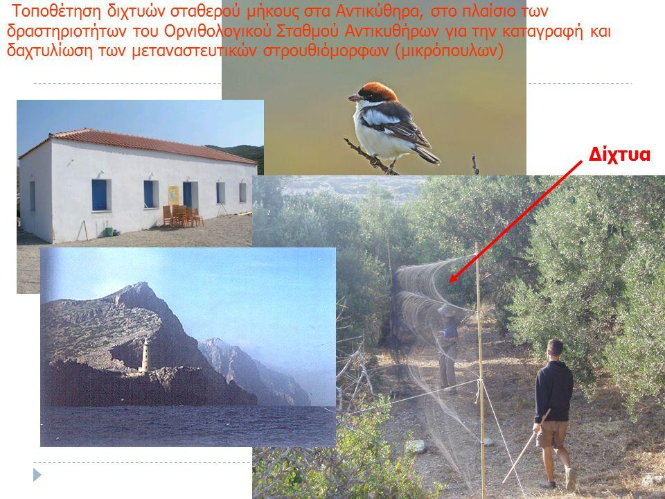 Τοποθέτηση διχτυών σταθερού μήκους στα Αντικύθηρα, στο πλαίσιο των δραστηριοτήτων του Ορνιθολογικού Σταθμού Αντικυθήρων για την καταγραφή και δαχτυλίωση των μεταναστευτικών στρουθιόμορφων (μικρόπουλων) Δίχτυα