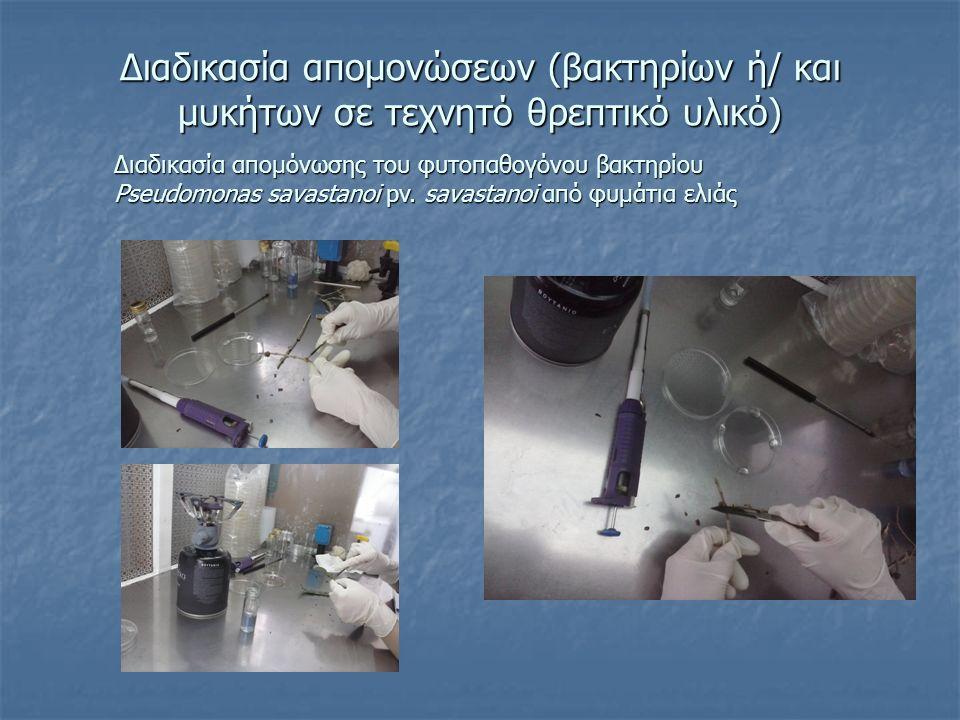 Διαδικασία απομονώσεων (βακτηρίων ή/ και μυκήτων σε τεχνητό θρεπτικό υλικό) Διαδικασία απομόνωσης του φυτοπαθογόνου βακτηρίου Pseudomonas savastanoi p