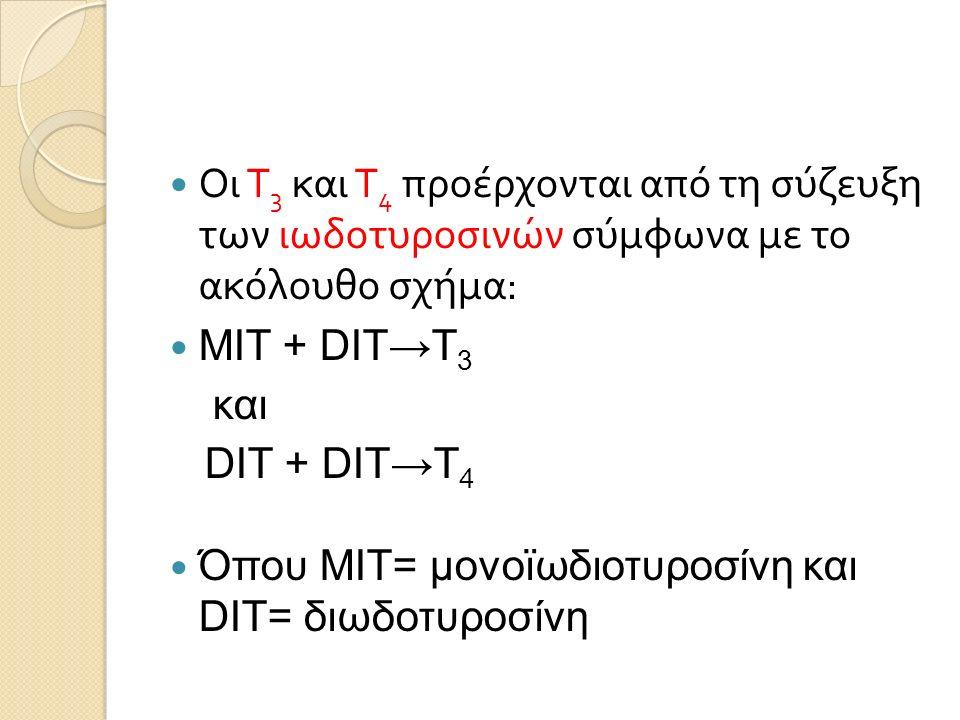 Οι Τ 3 και Τ 4 προέρχονται από τη σύζευξη των ιωδοτυροσινών σύμφωνα με το ακόλουθο σχήμα : MIT + DIT→T 3 και DIT + DIT→T 4 Όπου MIT= μονοϊωδιοτυροσίνη και DIT= διωδοτυροσίνη