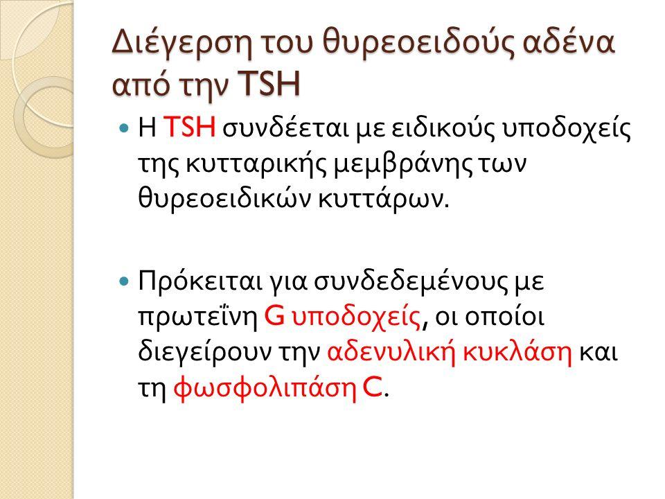 Διέγερση του θυρεοειδούς αδένα από την TSH Η TSH συνδέεται με ειδικούς υποδοχείς της κυτταρικής μεμβράνης των θυρεοειδικών κυττάρων.