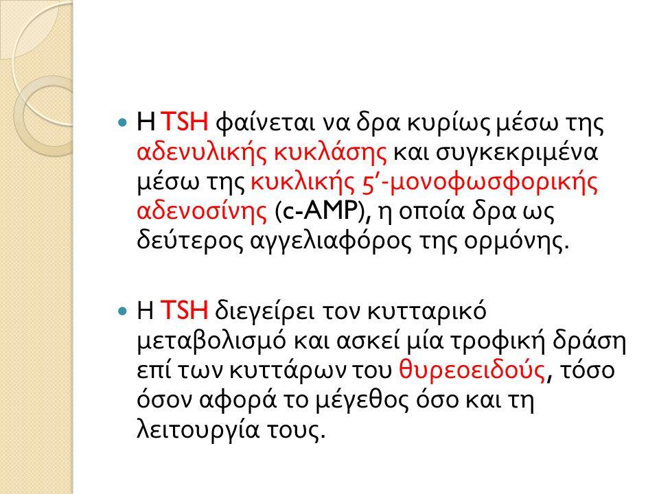 H TSH φαίνεται να δρα κυρίως μέσω της αδενυλικής κυκλάσης και συγκεκριμένα μέσω της κυκλικής 5'- μονοφωσφορικής αδενοσίνης (c-AMP), η οποία δρα ως δεύτερος αγγελιαφόρος της ορμόνης.