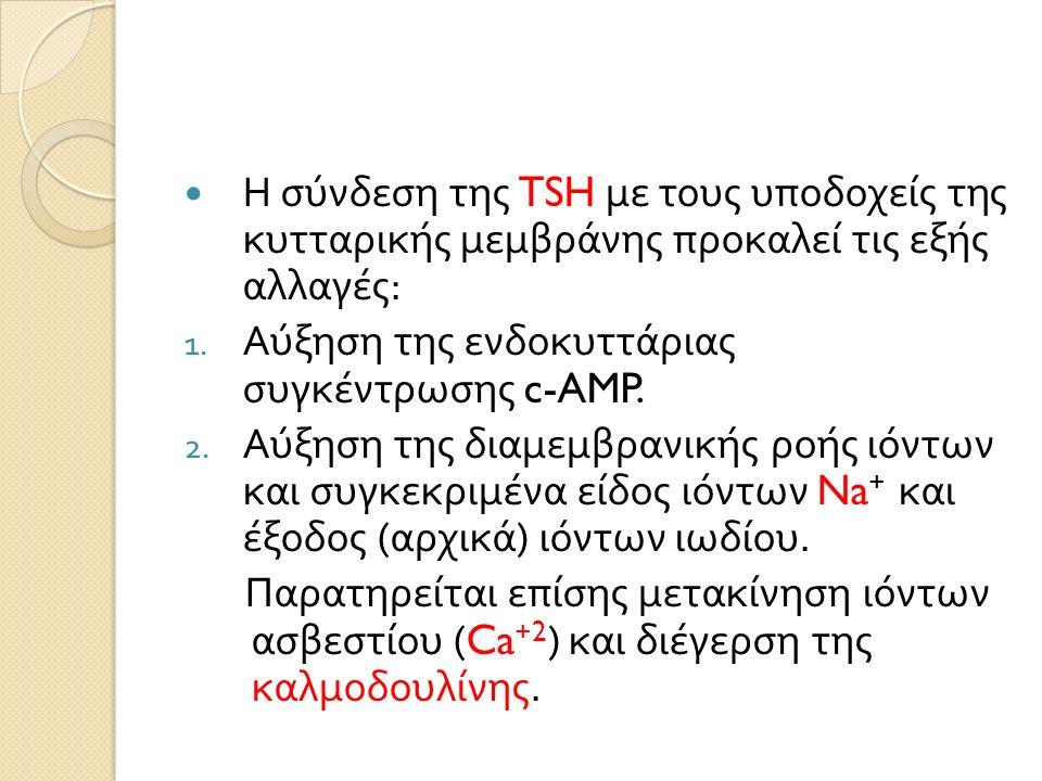 Η σύνδεση της TSH με τους υποδοχείς της κυτταρικής μεμβράνης προκαλεί τις εξής αλλαγές : 1.