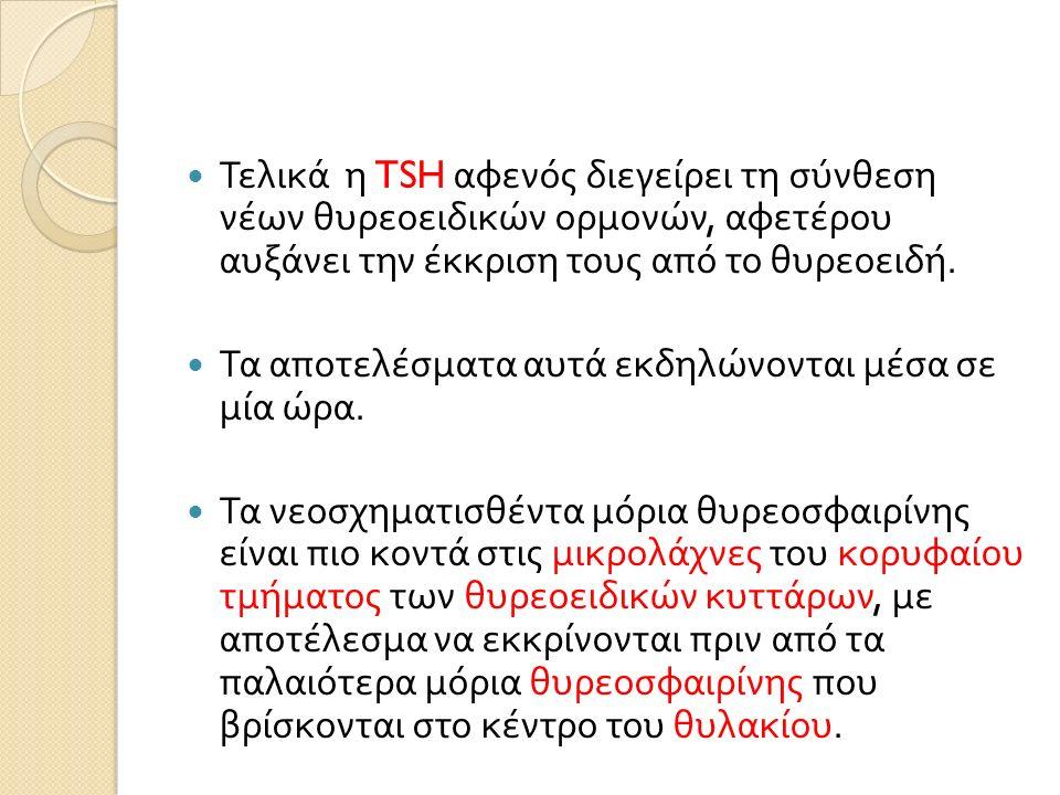 Τελικά η TSH αφενός διεγείρει τη σύνθεση νέων θυρεοειδικών ορμονών, αφετέρου αυξάνει την έκκριση τους από το θυρεοειδή.