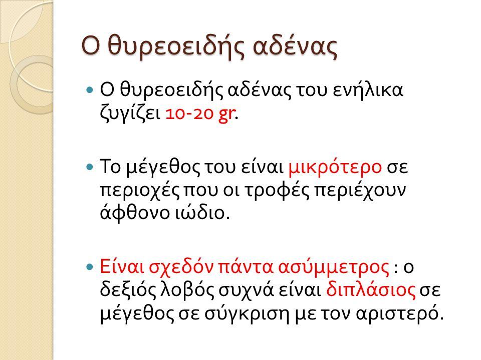 Ο θυρεοειδής αδένας Ο θυρεοειδής αδένας του ενήλικα ζυγίζει 10-20 gr.