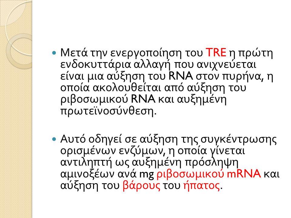 Μετά την ενεργοποίηση του TRE η πρώτη ενδοκυττάρια αλλαγή που ανιχνεύεται είναι μια αύξηση του RNA στον πυρήνα, η οποία ακολουθείται από αύξηση του ριβοσωμικού RNA και αυξημένη πρωτεϊνοσύνθεση.