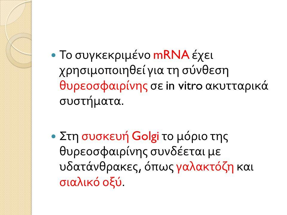 Το συγκεκριμένο mRNA έχει χρησιμοποιηθεί για τη σύνθεση θυρεοσφαιρίνης σε in vitro ακυτταρικά συστήματα.
