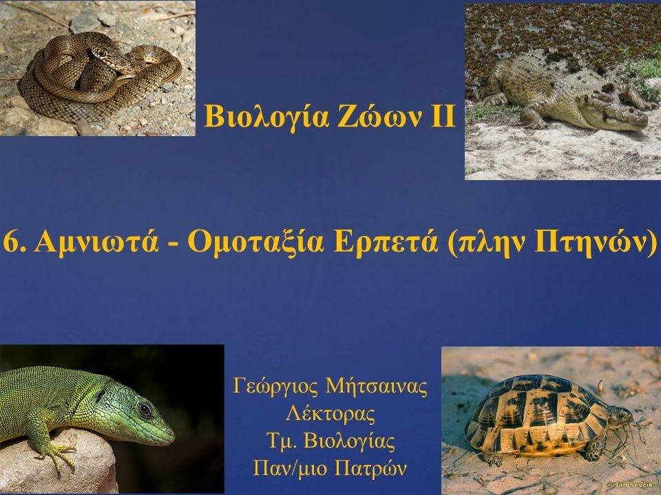 Βιολογία Ζώων ΙΙ 6. Αμνιωτά - Ομοταξία Ερπετά (πλην Πτηνών) Γεώργιος Μήτσαινας Λέκτορας Τμ.