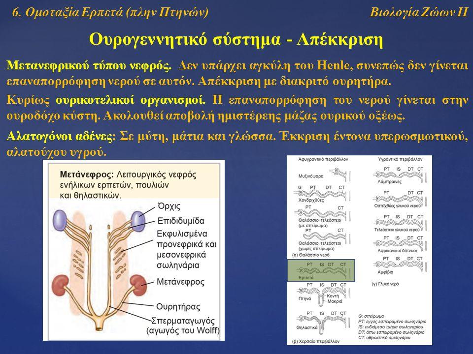 Βιολογία Ζώων ΙΙ Ουρογεννητικό σύστημα - Απέκκριση 6.