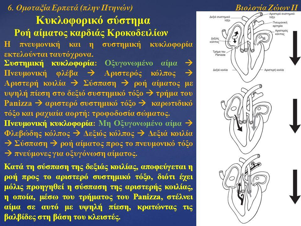 Βιολογία Ζώων ΙΙ Κυκλοφορικό σύστημα Ροή αίματος καρδιάς Κροκοδειλίων Η πνευμονική και η συστημική κυκλοφορία εκτελούνται ταυτόχρονα.