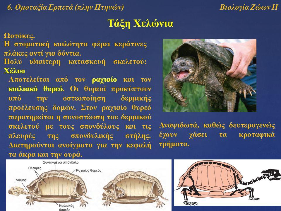 Τάξη Χελώνια Βιολογία Ζώων ΙΙ6.