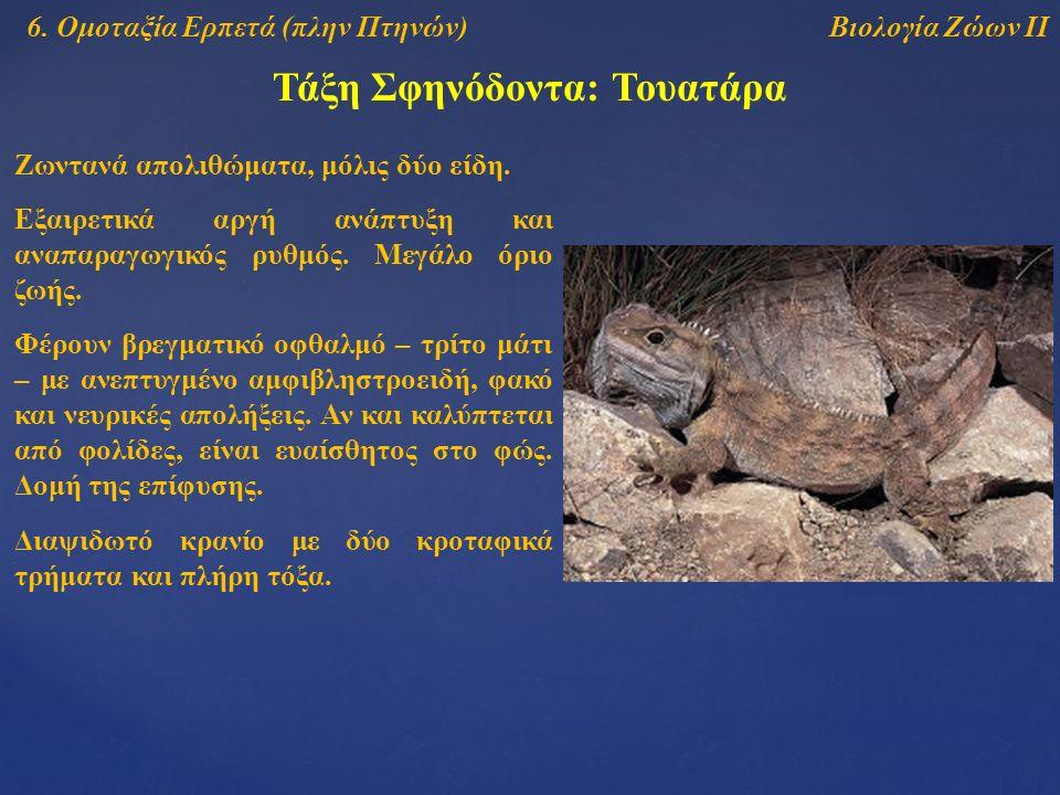 Τάξη Σφηνόδοντα: Τουατάρα Βιολογία Ζώων ΙΙ6.